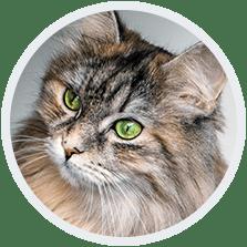 Kattens energibehov