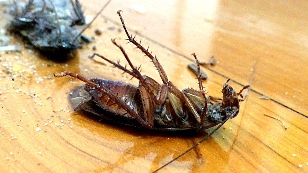 Kakerlakker og kvarterløft 2